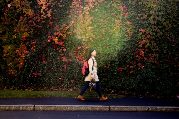 A Northeastern student walks past foliage outside of Snell Library. Photo by Matthew Modoono/Northeastern University